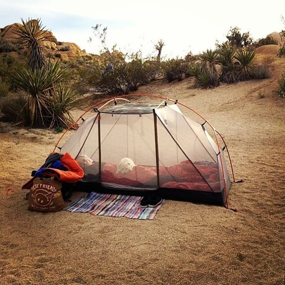 Summer Tents for Kids and Adults 2016 7