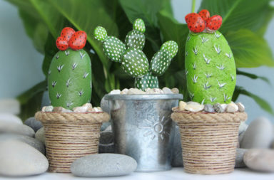 Cactus Planters for 2016 8